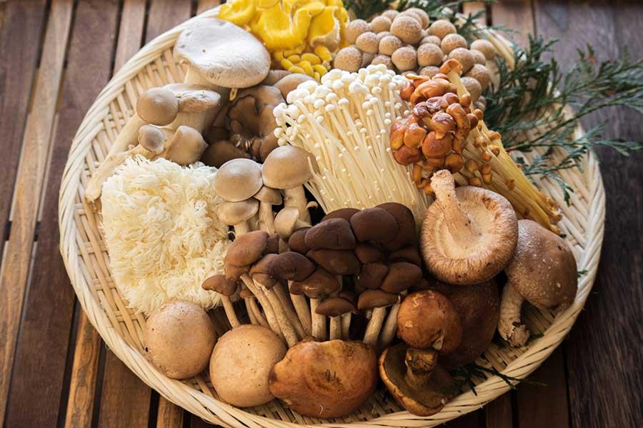 日本での食用は100種ほどといわれるキノコ(写真はイメージ)【写真:写真AC】