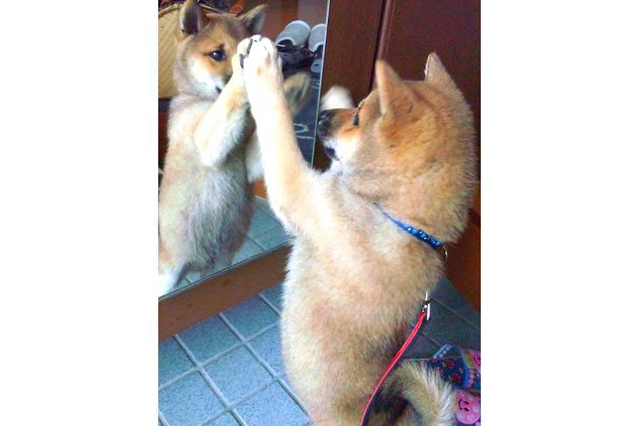 鏡に向かってお話しするぱんくん【写真提供:Green(@greenchan0718)さん】