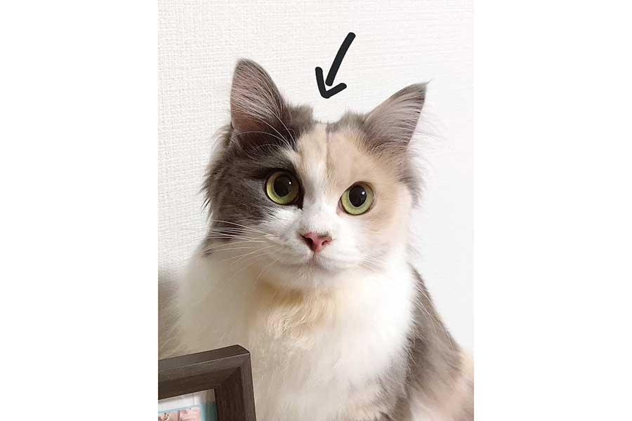 頭がへこんで見えるハンちゃん【写真提供:ハンちゃんはErinの猫(@Erin45805941)さん】