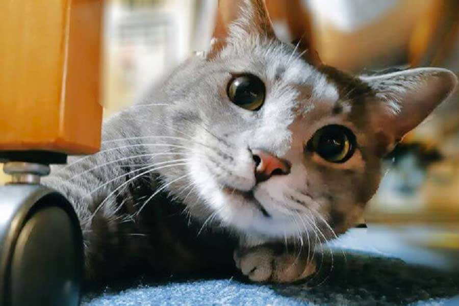 現在の柔和な顔つきのねずみちゃん【写真提供:ねこのねずみ(@nezumini08)さん】
