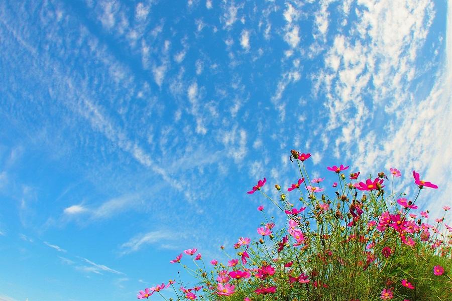 空気が澄んだ気持ちいい秋空(写真はイメージ)【写真:写真AC】
