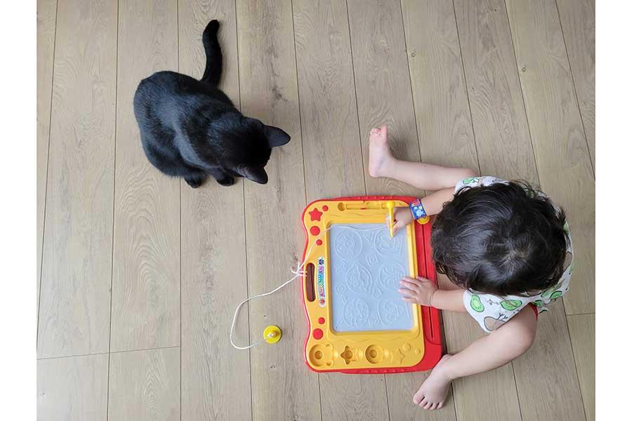 息子さんが遊ぶ様子を見守るティチャラくん【写真提供:仔猫を拾ったので(@yukifuri0biyori)さん】
